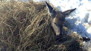 Deer rescued