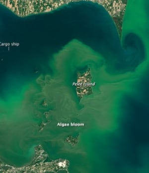 Algae Bloom Pelee Island