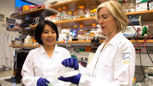 CRISPR pioneer Jennifer Doudna, right, and her lab manager, Kai Hong, work in her laboratory with the new research tool.