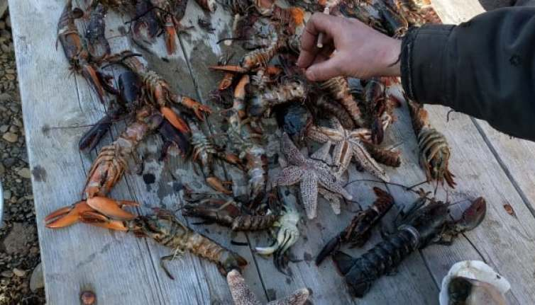 Eric Hewey and others discovered these aquatic creatures washed up on a beach in Digby County in Nova Scotia on Boxing Day.