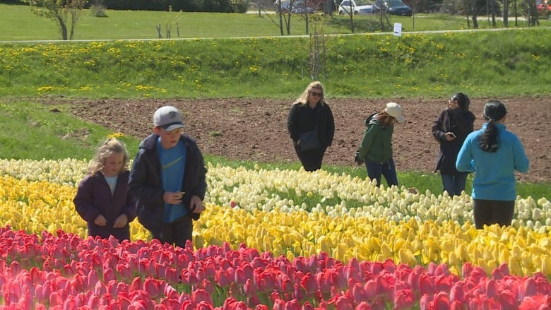 Tulip Blossom Social Celebrates 70000 Flowers Planted By