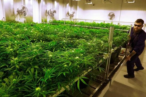 Marijuana Warning Labels