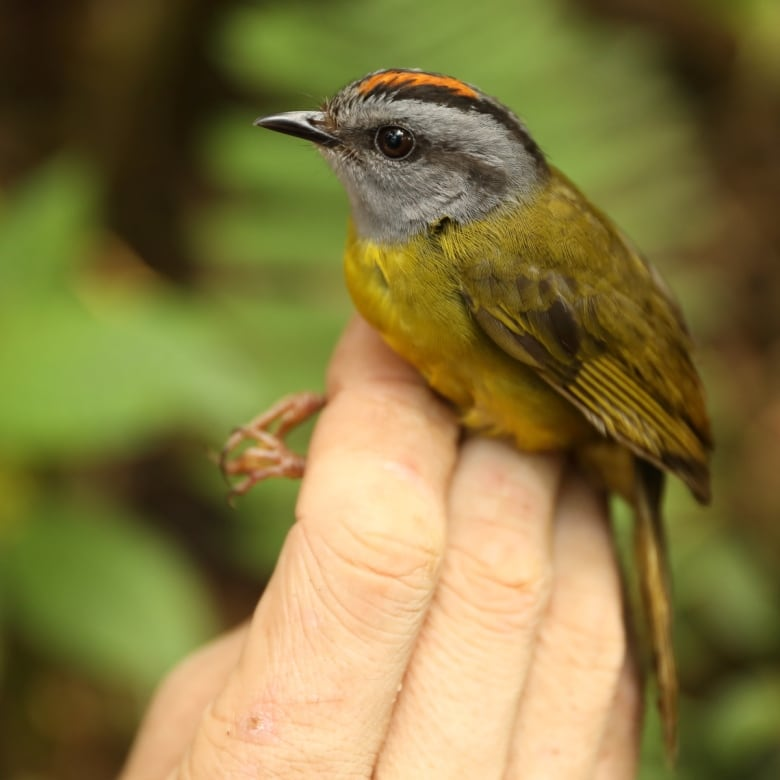 60% of world's wildlife has been wiped out since 1970 russet crowned warbler