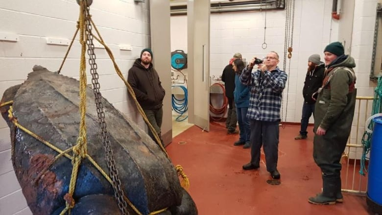 Large leatherback sea turtle found dead on the South Shore of P.E.I. turtle
