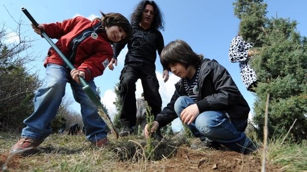 fyrom tree seedlings planting