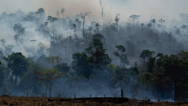 Feds pushed to abandon trade talks with Brazil over Amazon deforestation from fires