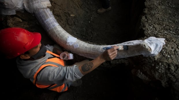 Mexican construction site may be world's biggest mammoth graveyard | CBC News