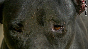A case before the court dealt with tapes showing pit bulls attacking other animals and one another.