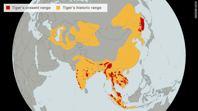 The World Wildlife Fund says there are now more tigers in captivity in the United States alone than there are in the wild worldwide.