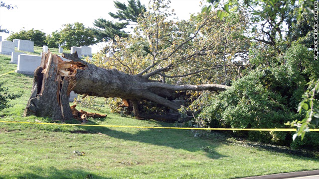 The iconic oak tree in Arlington National Cemetery was a casualty of Hurricane Irene on August 27.