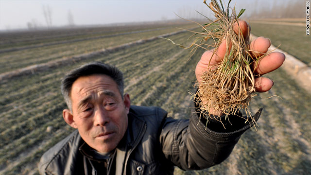 A Chinese farmer holds up dried seeds at his drought-stricken fields in China's Shandong province.