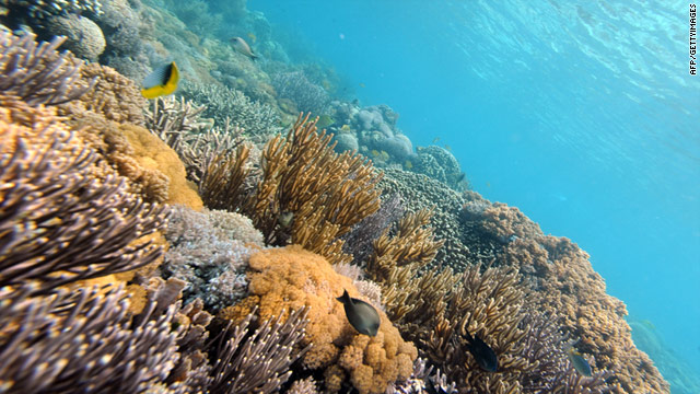 The percentage of reefs rated as threatened has risen by 30% in 10 years, according to a World Resources Institute report.