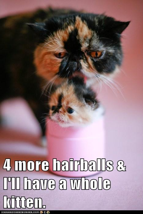 4 more hairballs & I'll have a whole kitten.