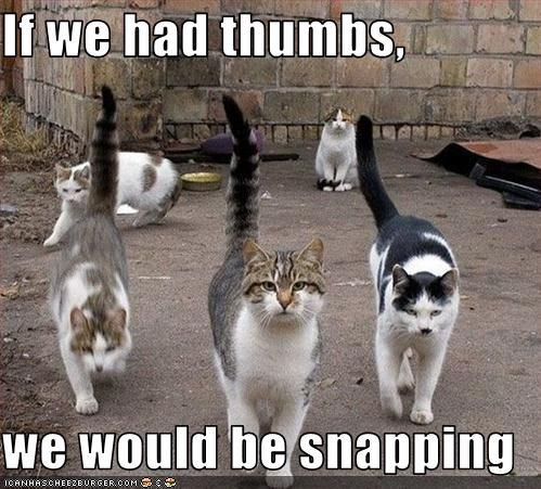 If we had thumbs,  we would be snapping