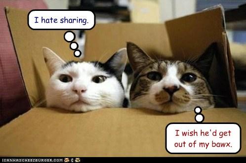 Cats Sharing