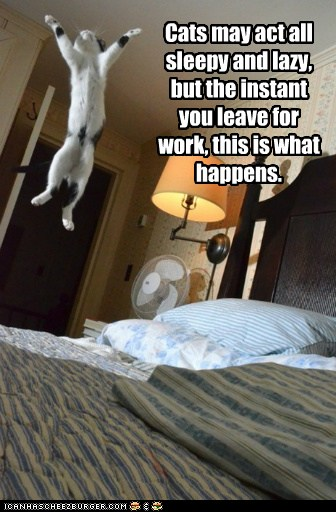 Lolcats: Look at All the Fun You're Missing!