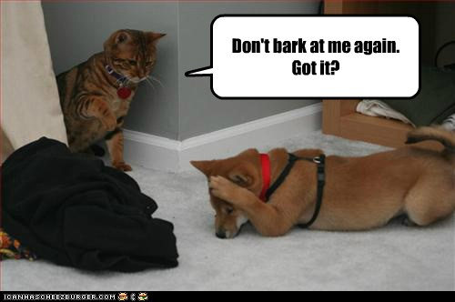 Lolcats: Don't bark