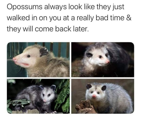 Possum Instagram Posts Photos And Videos Picuki Com