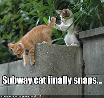 I Different Kind Of Trainspotter Cheezburger Funny Memes