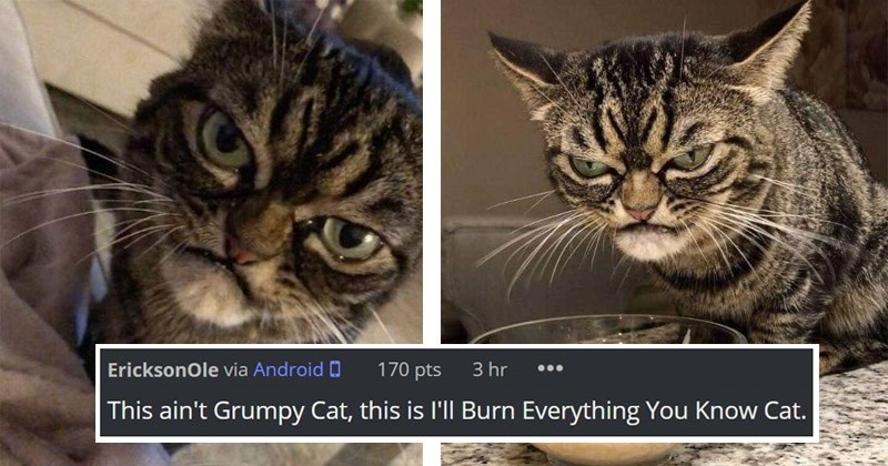 33 Funny Cat Memes That Never Fail To Make Us Lol I Can Has