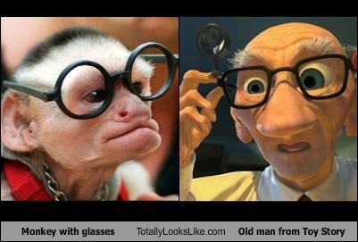 Monkey With Glasses Totally Looks Like Old Man From Toy Story