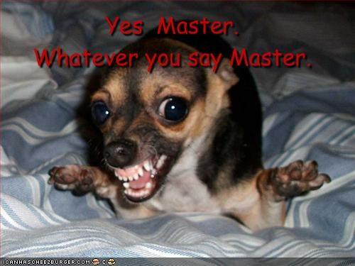 Yes Master Whatever You Say Master Cheezburger Funny Memes
