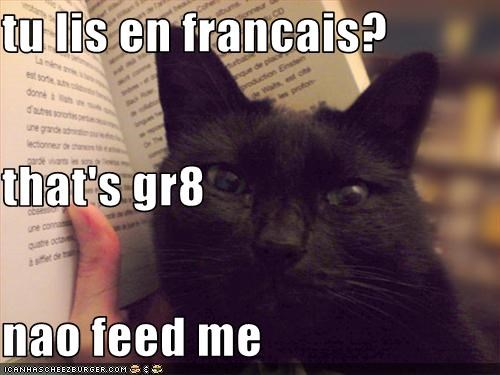 Tu Lis En Francais That S Gr8 Nao Feed Me Cheezburger Funny