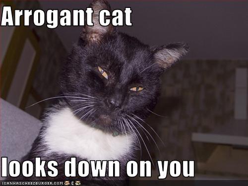 50 Clever Cat Memes Funny Pictures Desicomments Com