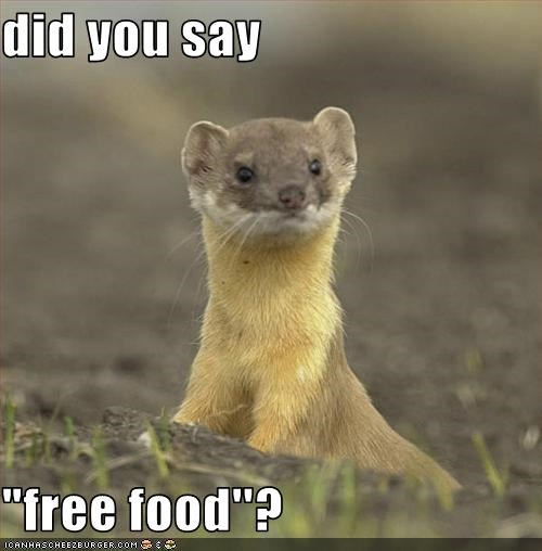 Did You Say Free Food Cheezburger Funny Memes Funny Pictures