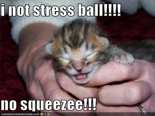 I Not Stress Ball No Squeezee Cheezburger Funny Memes