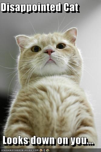 How A Cat Looks From The Bottom When It S Lying Down Meme