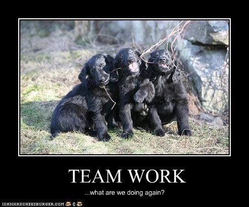 Team Work Cheezburger Funny Memes Funny Pictures