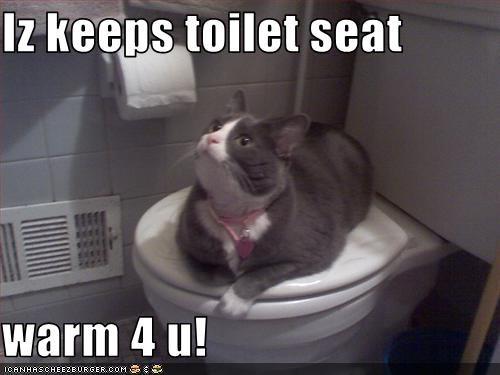 Iz Keeps Toilet Seat Warm 4 U Cheezburger Funny Memes Funny