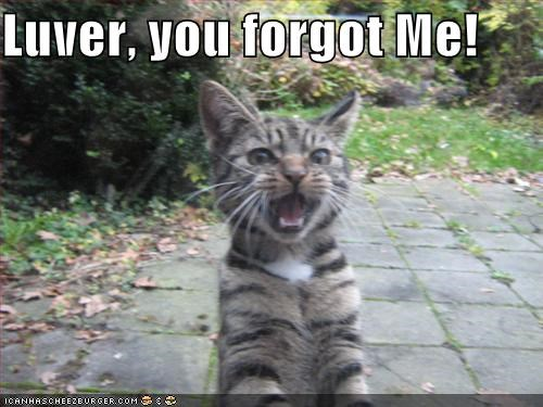 Luver You Forgot Me Cheezburger Funny Memes Funny Pictures