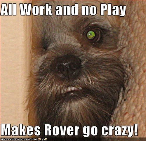 All Work And No Play Makes Rover Go Crazy Cheezburger Funny