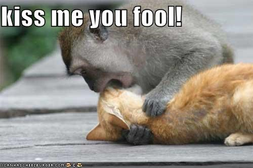 Kiss Me You Fool Cheezburger Funny Memes Funny Pictures