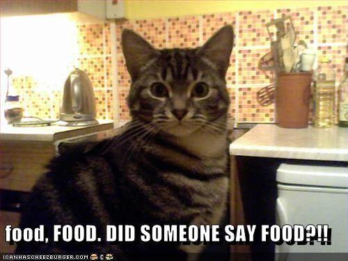 Food Food Did Someone Say Food Cheezburger Funny Memes