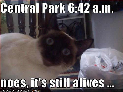 Central Park Memes Gifs Imgflip