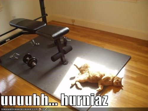 Uuuuhh Hurniaz Cheezburger Funny Memes Funny Pictures