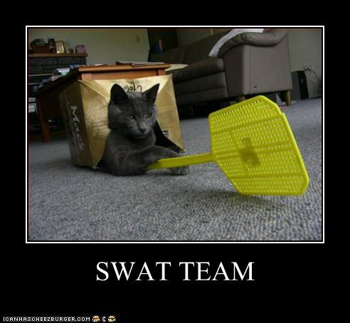 I Can Has Cheezburger Fly Swatter Funny Animals Online