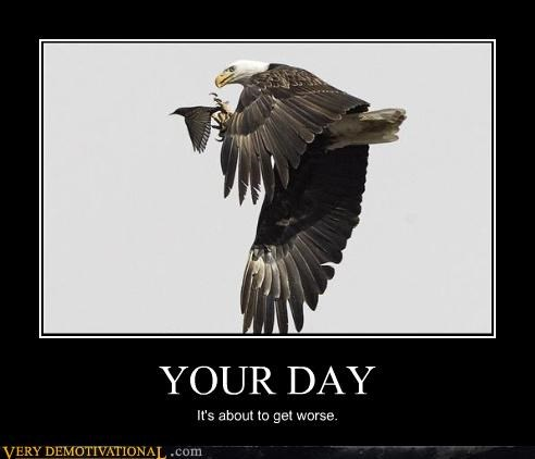 Memebase Bald Eagle All Your Memes In Our Base Funny Memes