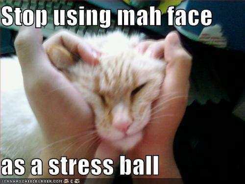 Stop Using Mah Face As A Stress Ball Cheezburger Funny Memes