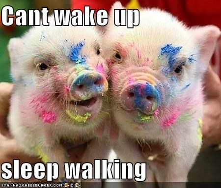 Cant Wake Up Sleep Walking Cheezburger Funny Memes Funny