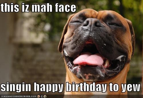 Funny Boxer Dog Birthday Memes