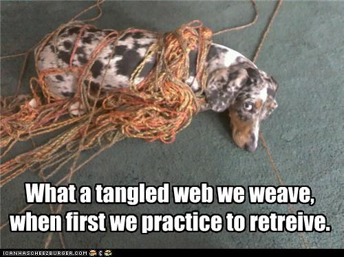 What A Tangled Web I Has A Hotdog Dog Pictures Funny