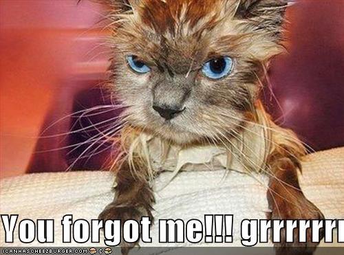 You Forgot Me Grrrrrrr Cheezburger Funny Memes Funny Pictures