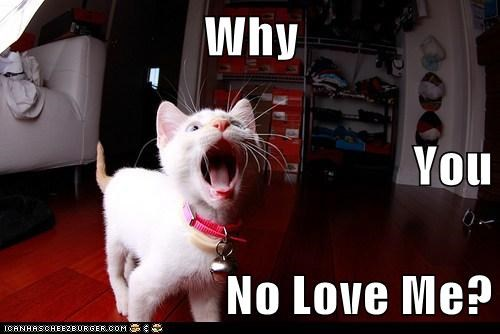 Why You No Love Me Cheezburger Funny Memes Funny Pictures