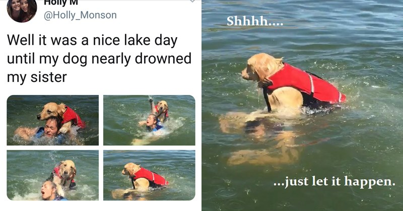 Devious Dog Trying To Drown His Human Is Getting Hilariously Memed