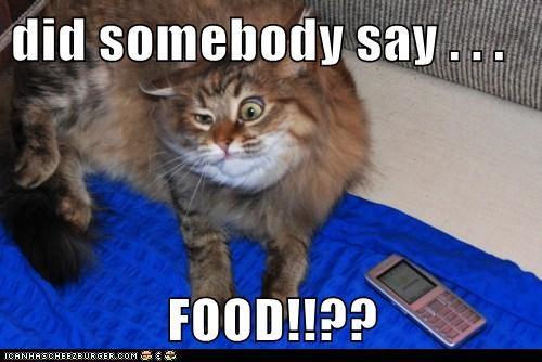 Did Somebody Say Food Cheezburger Funny Memes