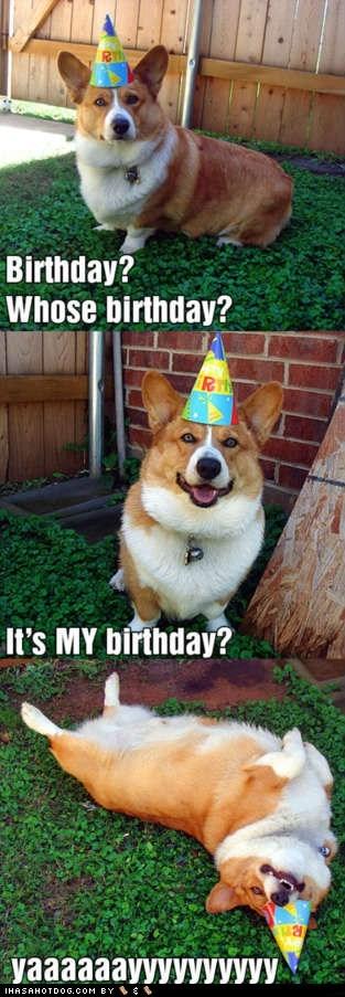 I Can Has Cheezburger Birthday Hat Funny Animals Online Cheezburger